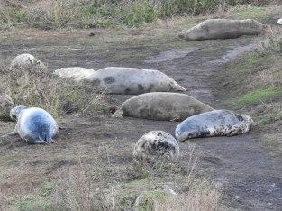2 Seal
