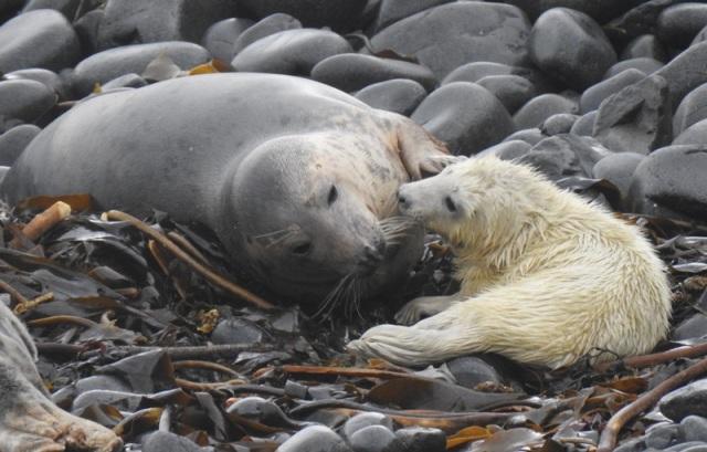 3 Seal mum and pup