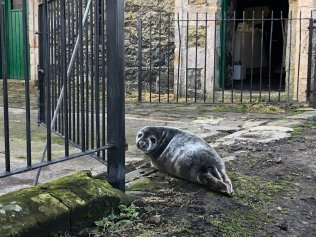 seal pup at gate