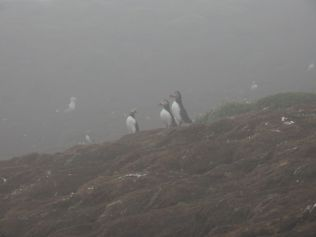 3 Fog